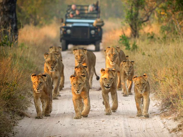 Southern Africa Highlights -  Gallery 3
