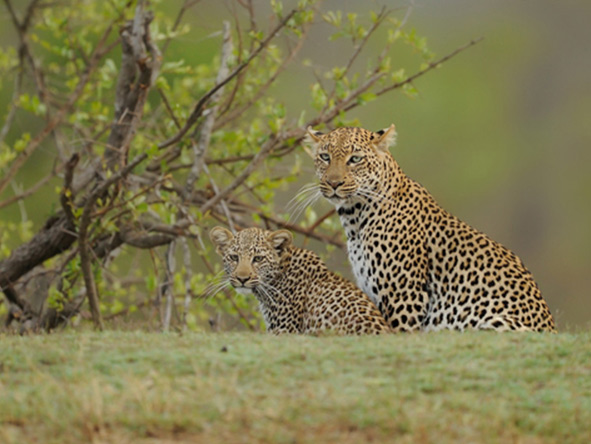 Cape Grace & Singita Honeymoon Retreat - Gallery 7