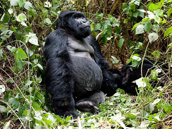 Gorillas, Big 5, Migration & Private Island - Gallery 1