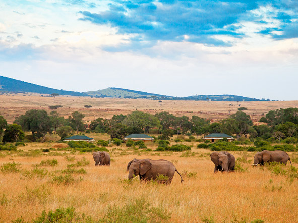 Kenya & Tanzania's Wildlife & Rwanda's Gorillas - Gallery 3