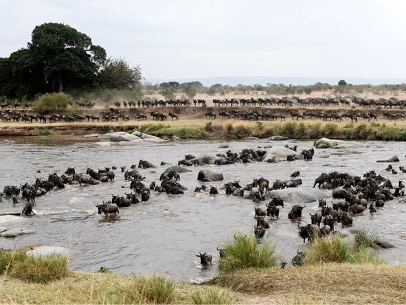 Kenya & Tanzania's Wildlife & Rwanda's Gorillas - Gallery 8