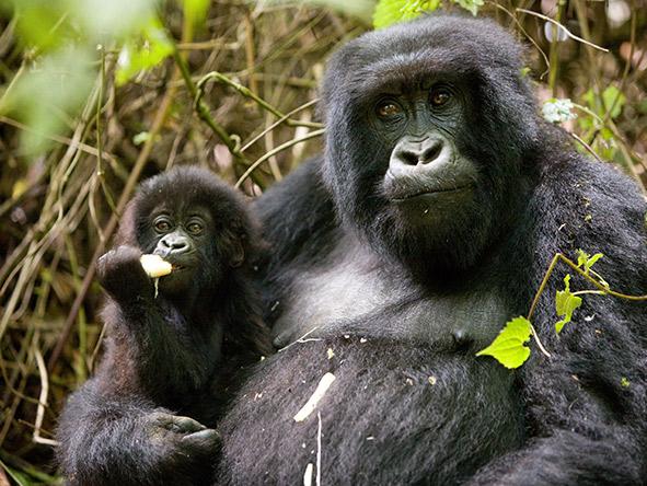 Kenya & Tanzania's Wildlife & Rwanda's Gorillas - Gallery 9