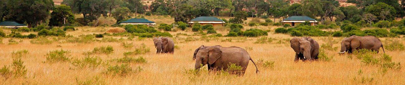 Kenya & Tanzania's Wildlife & Rwanda's Gorillas - Banner