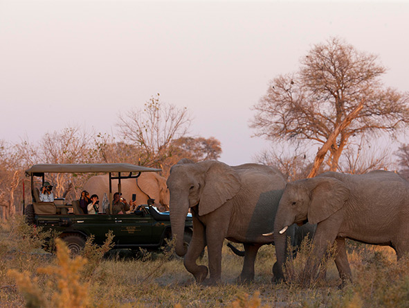 Expedition to Botswana's Selinda & Kalahari - Gallery9