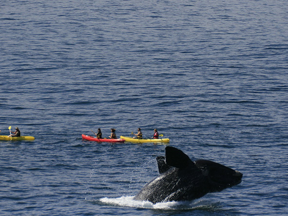 The Great Cape Whale Watching Experience - Gallery 6