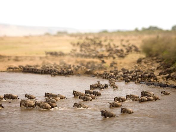 Luxury Glimpse of the Mara - Gallery 3