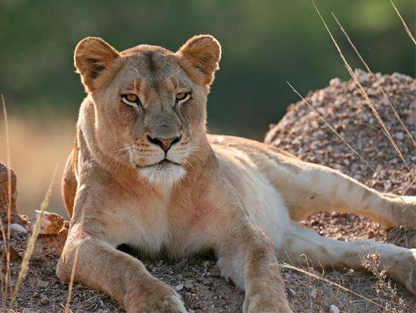 Luxury Glimpse of the Mara - Gallery 4