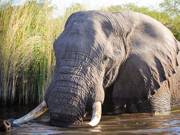 Okavango, Moremi & Savute Safari - Gallery 3