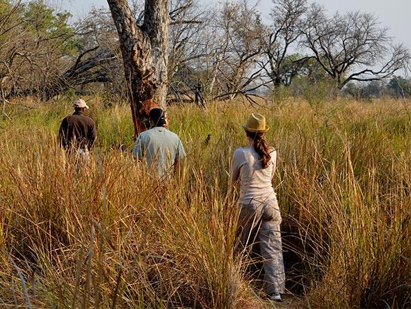 Okavango, Moremi & Savute Safari - Gallery 7