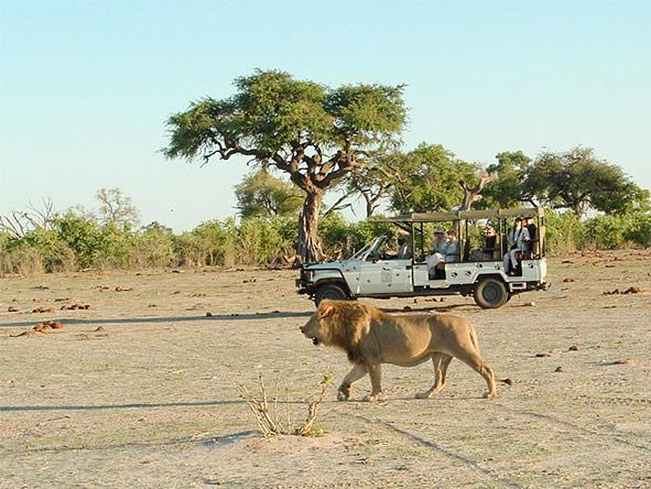 Okavango, Moremi & Savute Safari - Gallery 8