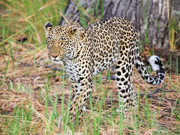 South Africa, Vic Falls & Chobe Adventure - gallery 4