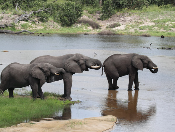 Botswana Luxury Safari - Gallery 6