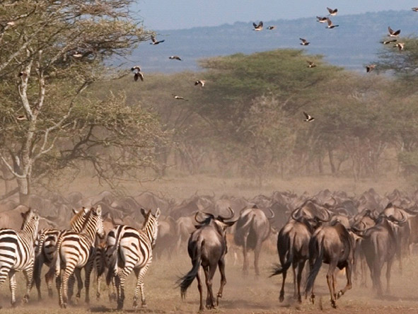 Sanctuary Serengeti Migration Camp - Gallery 1