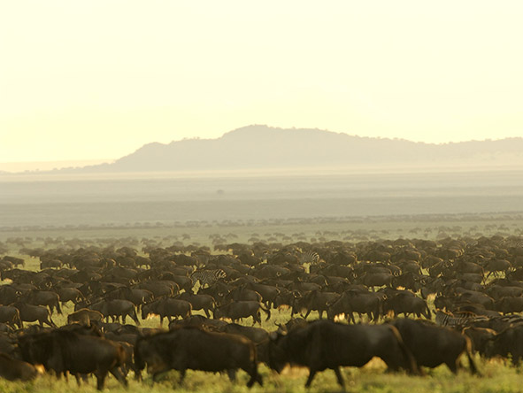 Sanctuary Serengeti Migration Camp - Gallery 6