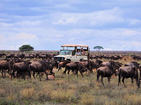 East Africa's Landscape, Migration & Gorillas - Gallery 1