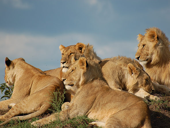 Mara Intrepids Camp - Gallery 5