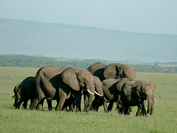 Mara Intrepids Camp - Gallery 6