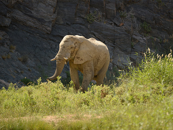 Okahirongo Elephant Lodge - Gallery 2
