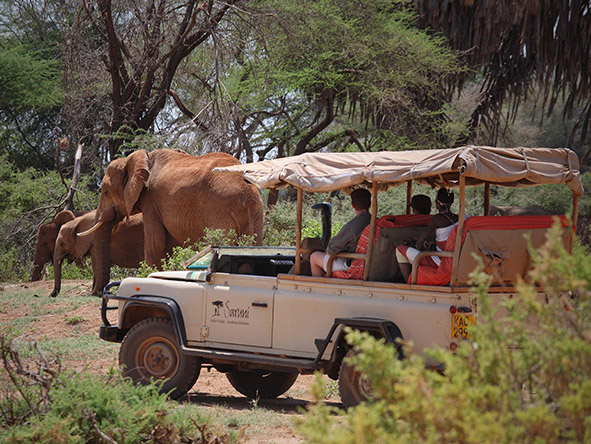 Luxury Kenya's Mara, Samburu & Beach - Gallery 9