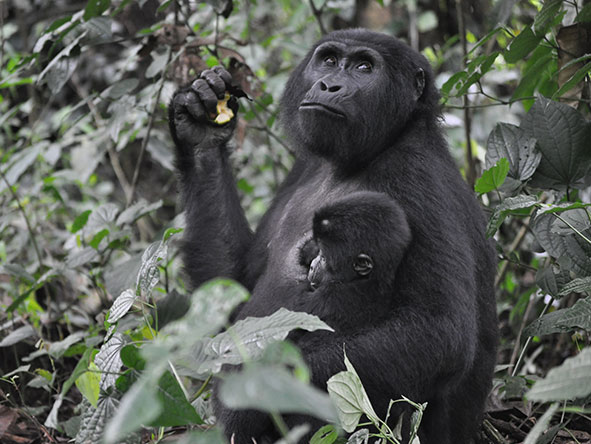 Active East Africa Wildlife, Landscape & Gorillas - gallery 10