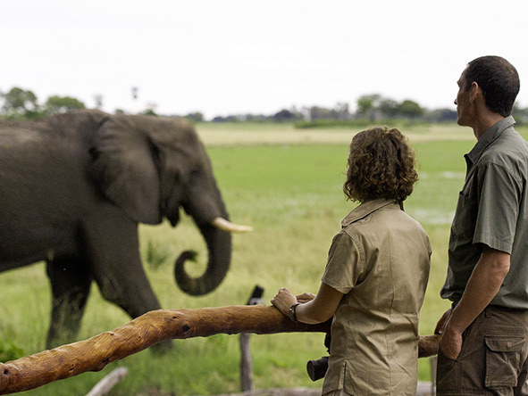 Epic Southern Africa Safari - Gallery 10