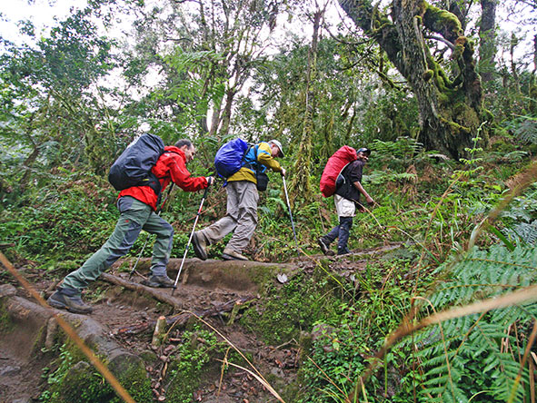 Kilimanjaro Trekking Machame - Gallery 5