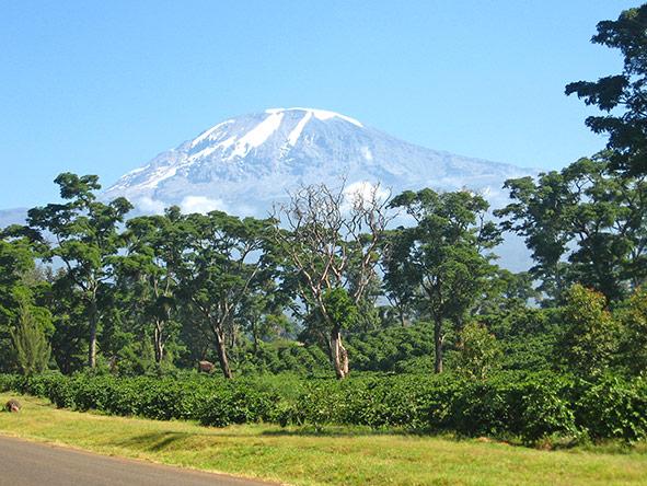Kilimanjaro Trekking Lemosho - gallery 1