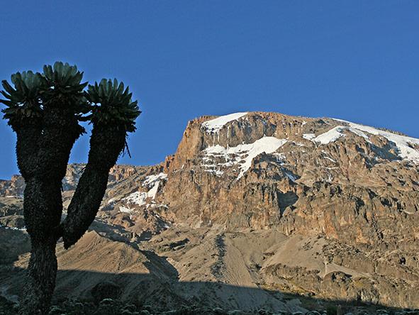 Kilimanjaro Trekking Lemosho - gallery 3
