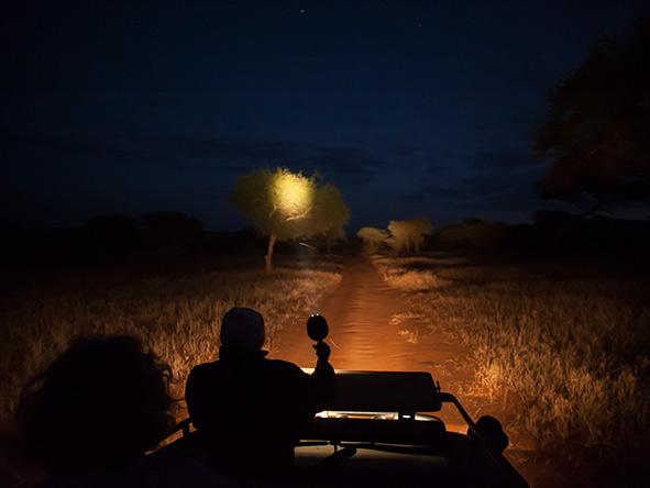 Kuro Tarangire - Night drive