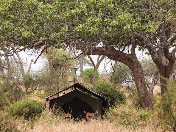 Kuro Tarangire - Tent view