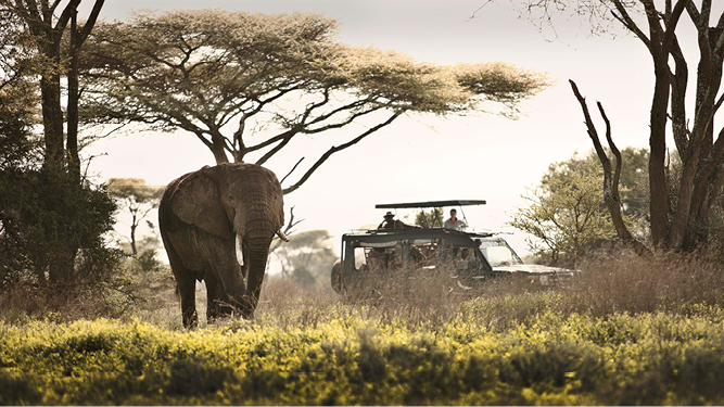 Which African Safaris to Book in February