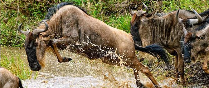 Tours & Safaris - Migration Safaris