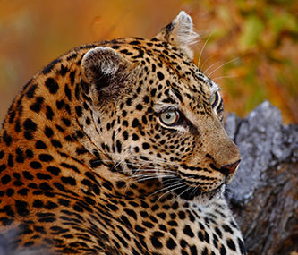 Tours & Safaris - Big 5 Safaris