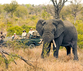Tours & Safaris - South Africa Safaris