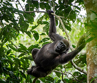 Tours & Safaris - Gorilla Trekking