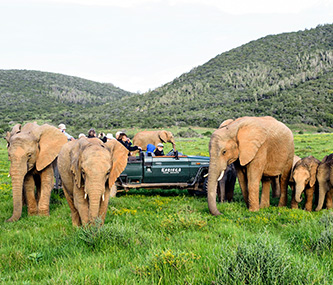 Tours & Safaris - Affordable African Packages