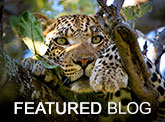 Featured Blog - Best African Safari Tours