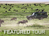 Featured Tour - Mara, Ngorongoro Crater & Serengeti