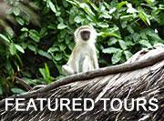 Zanzibar tours & safaris