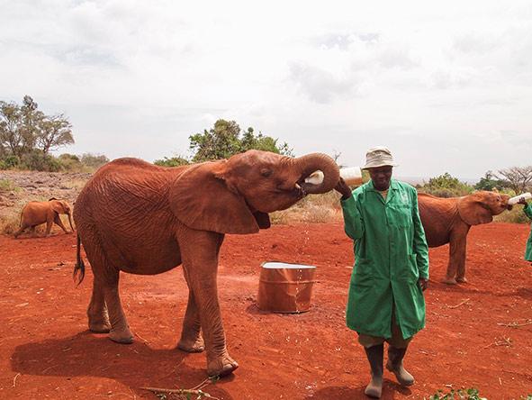 Family Amboseli & Masai Mara - gallery 2