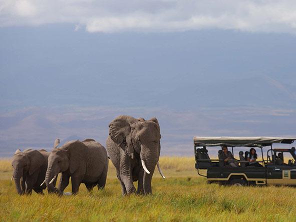 Family Amboseli & Masai Mara - gallery 8