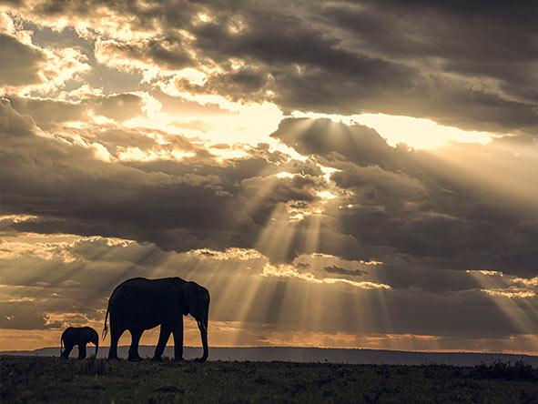 Romantic Kenya's Masai Mara - Gallery 2