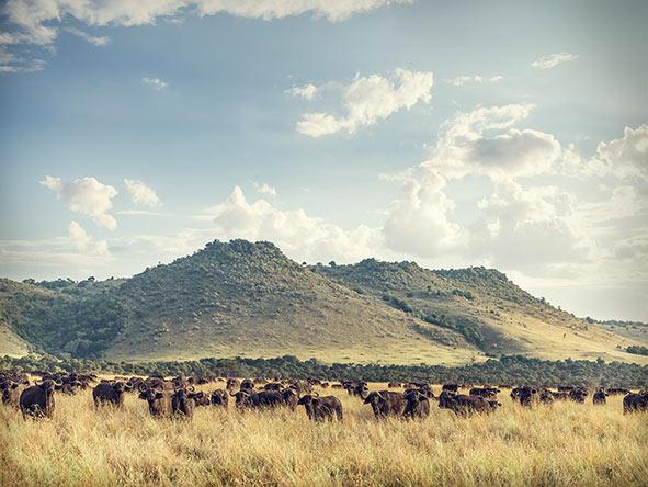 Romantic Kenya's Masai Mara - Gallery 3