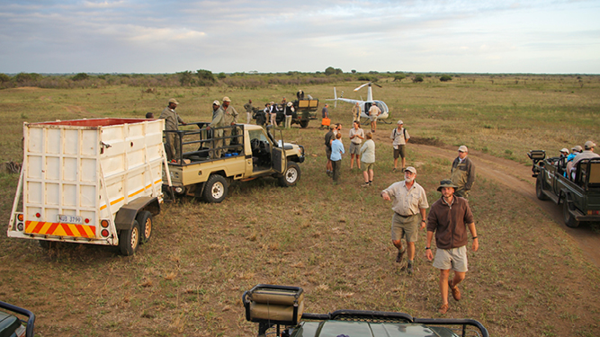 Rhino Conservation: Behind The Scenes At The First Rhino Move