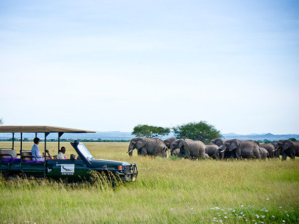 Serengeti: Safari vehicle viewing elephants