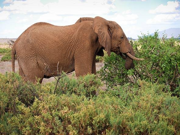 Elephant Bedroom Camp - Elephant