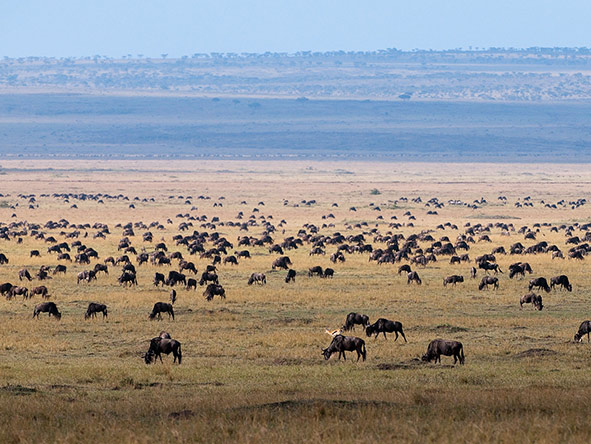 The endless Serengeti plains