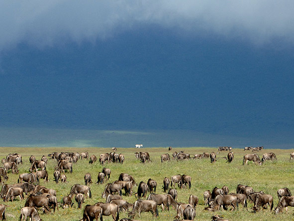 Storm clouds gather in East Africa