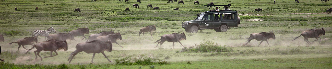 Wildebeest Migration - April to June