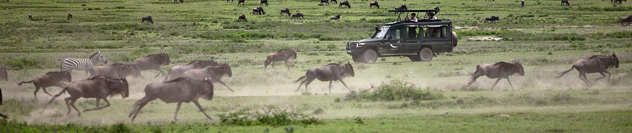 Wildebeest Migration - April to June